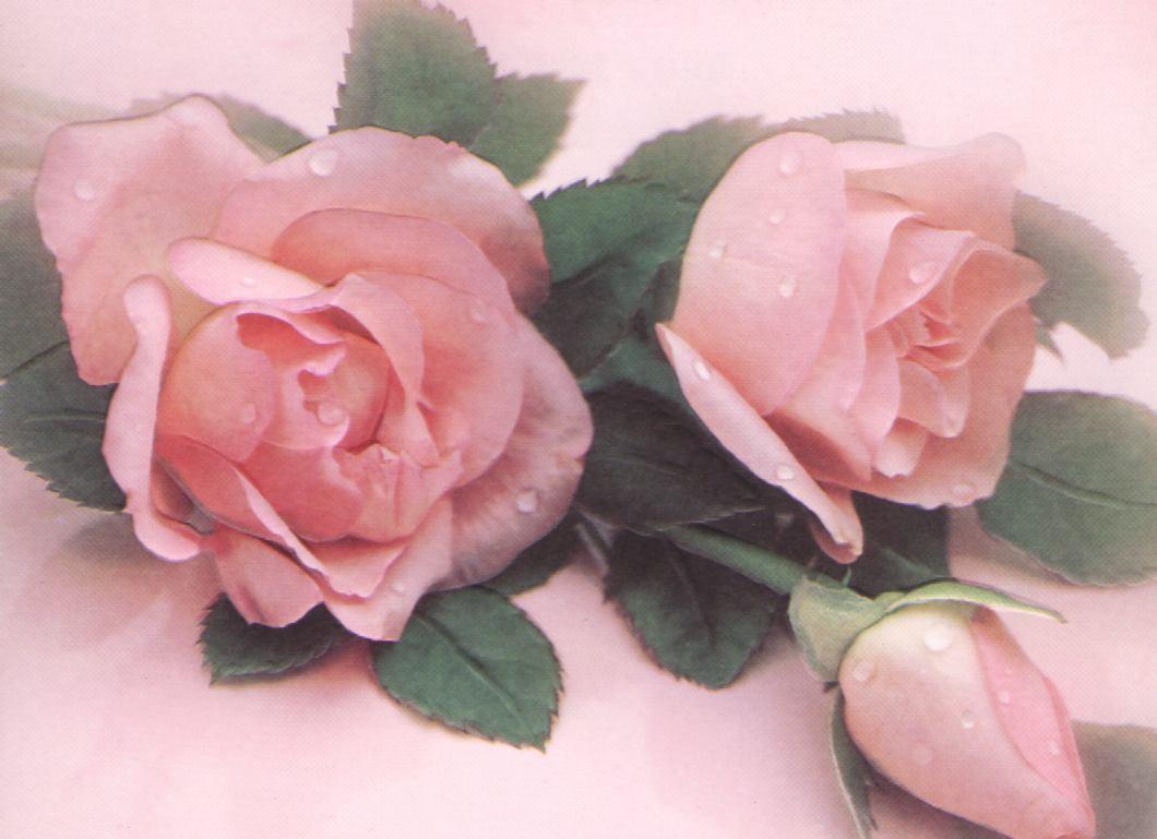 Bonjour celine rose comme des fleurs roses ou la panthere for Commandes fleurs